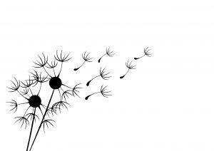 Sintre Pusteblume. 300x212 - Fingerabdruck-Gästebuch: originell und vielseitig