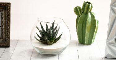 Kaktus 375x195 - Wohlfühl-Raumduft zum selber machen!