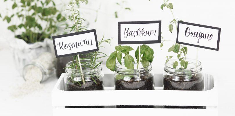 Gartenkräuter für die Küche
