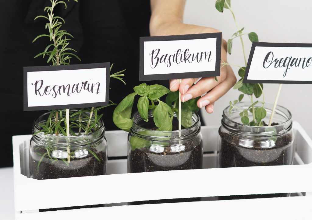 Selbstgemachter Kräutergarten für deine Küche | Sintre