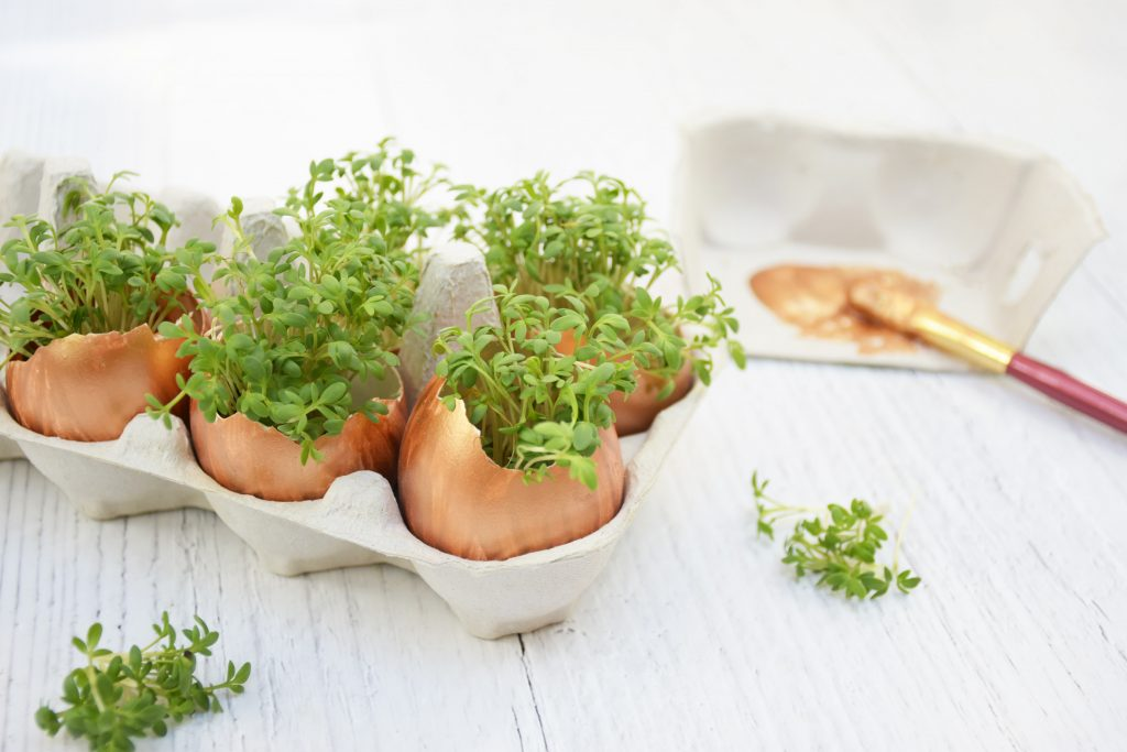 Ostereier bepflanzen